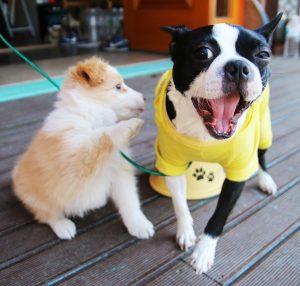 Dos gossos juguen al carrer