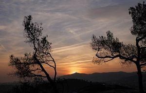 Silueta d'arbres a una posta de sol a Barcelona