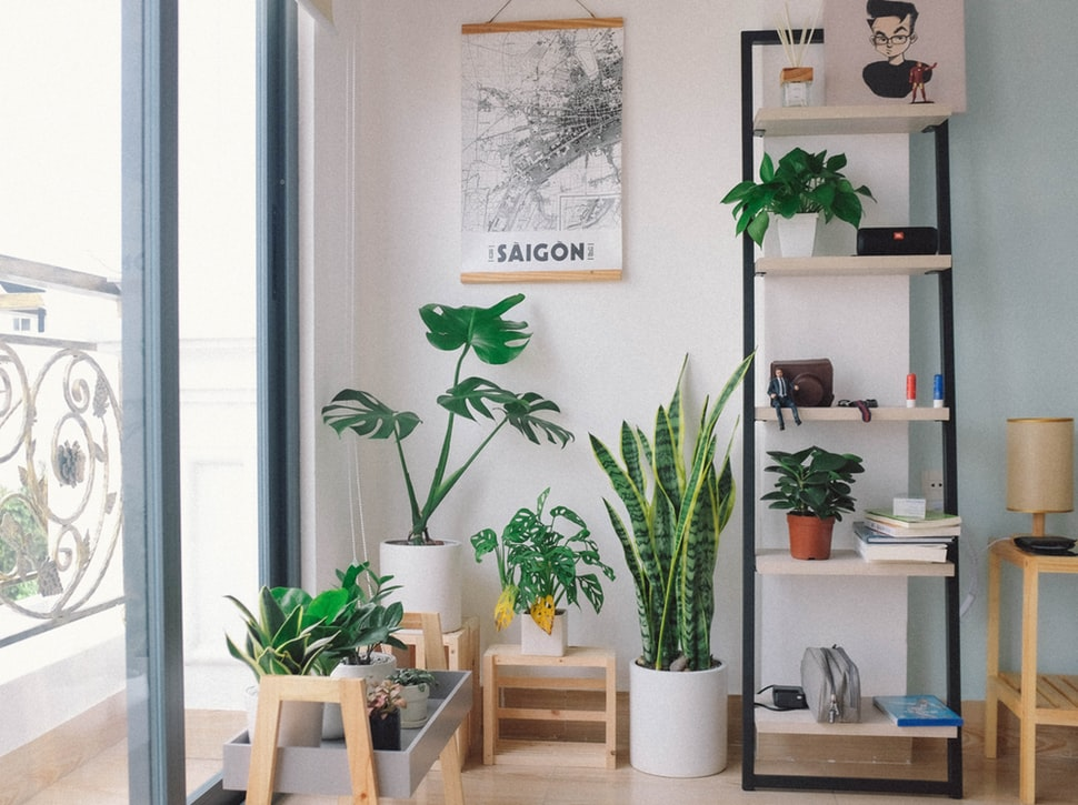 Plantes decorant un apartament