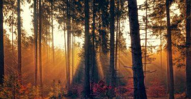 Colors de tardor al bosc