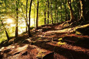 Il·luminació mística a un bosc