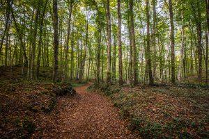 Imatge d'un bosc a la tardor