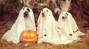 Gossos disfressats de fantasma per a Halloween
