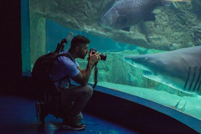 chico fotografiando a un tiburón en un acuario